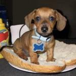 Profile photo of Hotdoggg